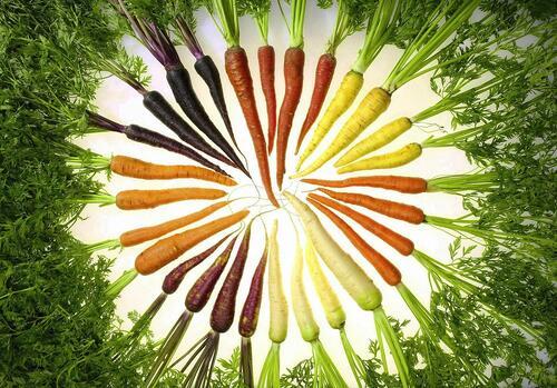 1566141587 2718 Carrot A Day E1360932795938